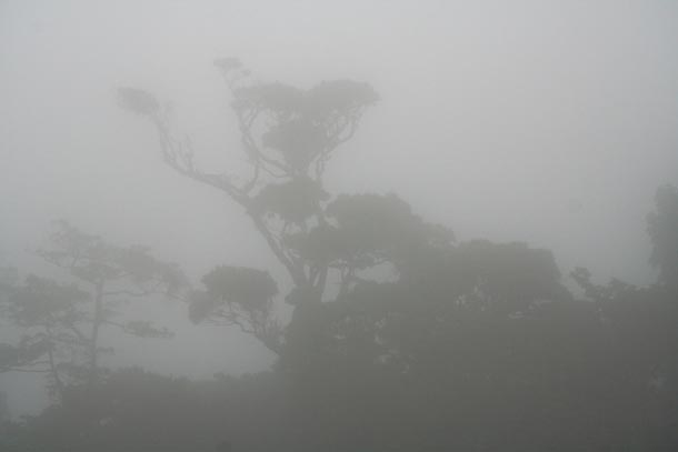Very thick fog with the dim forms of isolated forest trees in the distance