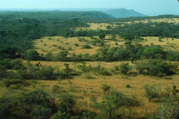 Landscape of an overgrown pasture with dried grass and low trees