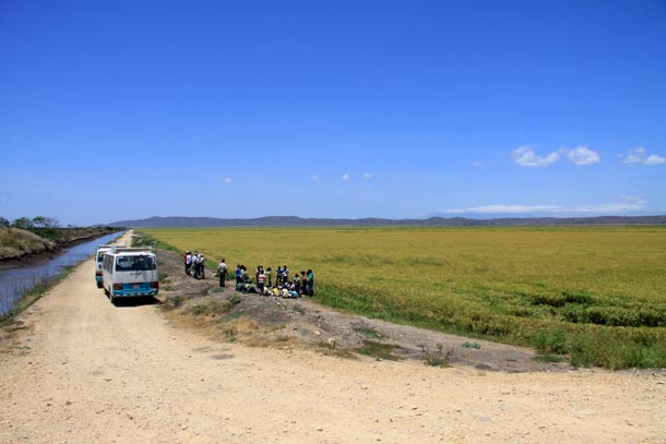 Rice field, its irrigation ditch, and a bus with a group of school children