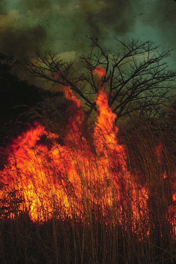 Tall bright orange flames with black smoke in tall dry grass