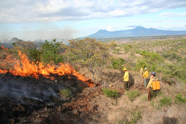 Fire crew in yellow shirts and helmets stopping a low fire with brooms and water