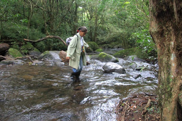 Parataxonomist Petrona Rios crossing headwaters of river