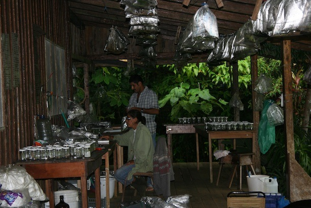 A large porch on the edge of forest filled with bottles on tables and bags hanging on lines; 2 parataxonomists looking at computer