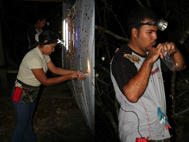 Hazel and Sergio wearing headlamps, collecting moths at night from a white sheet hung with lights